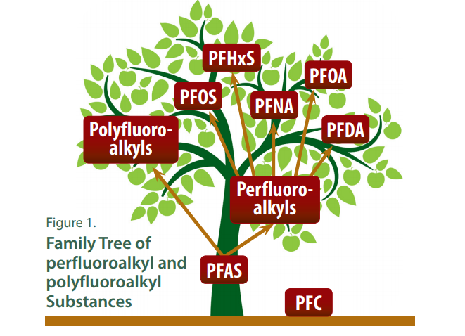 pfas-family-tree